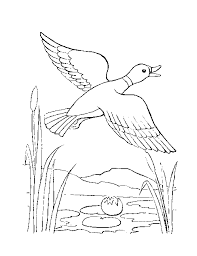 Small Picture Amazing of Zoo Animal Coloring Page At Wildlife Coloring 2830