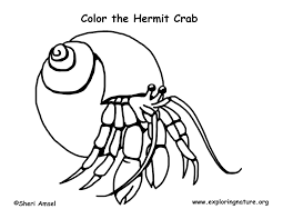 Small Picture Hermit Crab Coloring Page