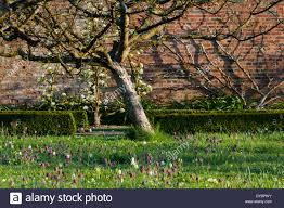 An Update On Underplanting Trees And Shrubs  A Way To GardenUnderplanting Fruit Trees