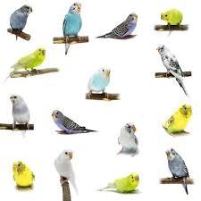 Bird Size Chart Small Bird Myths Vs Facts