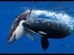 whale doentary