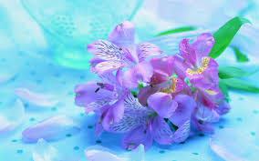 spring images beautiful spring hd wallpaper and background photos