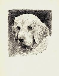 1935 antique clumber spaniel print gallery wall art gift for dog lover cfw 1747