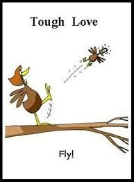 Tough Love Quotes Classy Tough Love Funny Parent Dump A Day