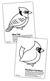 Small Picture Blue Jay and Cardinal Coloring Pages in Free Downloads Coloring Pages