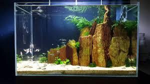 hastatus ada cube garden 60 p