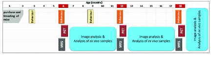Gantt Chart Of The Study Behaviour Tests And Positron