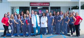 lauren p veterinary istant armando e registered veterinary technician greg p registered veterinary technician dr kiara falco
