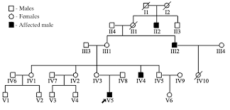 Genetic Analysis Of A 12 Year Old Boy With X Linked