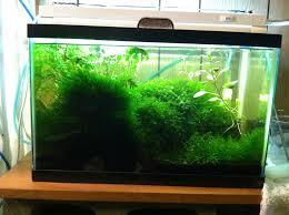 t2 lights lighting over planted 10 gallon aquarium