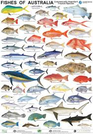 Australian Reef Fish Species Chart Smarter Shopping Better Living Aliexpress Com Fish Chart