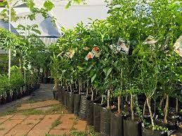 bare root vs potted fruit trees wild
