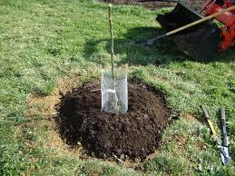 How To Plant Apple Trees And Other Fruit TreesWhen Do You Plant Fruit Trees
