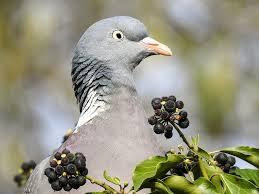 Resultado de imagen para palomas