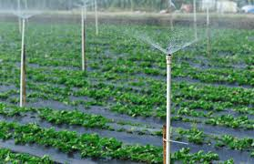 Small Picture Best Garden Irrigation System Elegant When Are The Best Times To