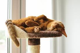 cat safe furniture. Safety \u2013 Cat Trees Encourage Your To Stay At Home And Away From The Real That Can Cause Harm Pet! You Are Assured Cats Safe Furniture E