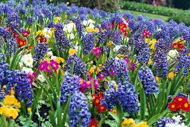 صوره الفرق بين الزهرة والوردة