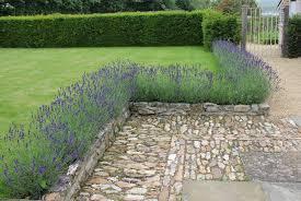Small Picture Lavender POD easy edible gardening lavandula dwarf munstead