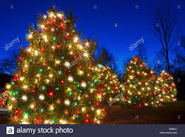 Blue White Outdoor Christmas Lights Outdoor Christmas Trees Have Been Decorated With Red And
