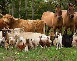 farm animals together. Plain Animals This Is A Post Dedicated To Different Animals Than I Have Posted About  Before Farm Animals For Farm Animals Together S