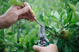 How To Train A Fruit Tree  GardenersworldcomCan You Prune Fruit Trees In The Summer