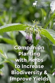 Companion Planting With Herbs To Increase Yields And