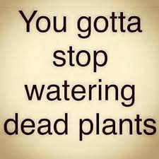 Negativity Quotes Interesting Stop Watering Dead Plantsbad Relationshipsbad Friendships