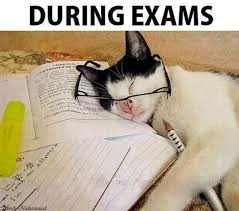 Image result for exams funny