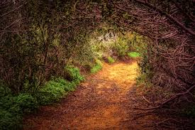 grass at night texture. Fine Texture Free Images  Tree Nature Forest Path Grass Branch Light Night  Sunlight Morning Texture Leaf Flower Tunnel Green Jungle Autumn Soil  In Grass At Night Texture I