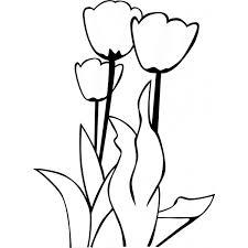 Disegno Di Fiori Tulipani Da Colorare Per Bambini