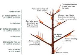 Summer Pruning Your Fruit Trees  Blackmoor Nursery  YouTubeCan You Prune Fruit Trees In The Summer
