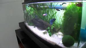 petco fish tanks. Simple Tanks On Petco Fish Tanks
