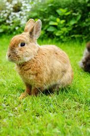 Abschied Nehmen Kaninchenhilfe Deutschland Ev Aktiv Für Kaninchen