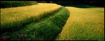 ese organic farming movement ese field