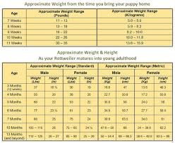Dog Food Chart By Weight And Age Rottweiler Growth Chart Know What To Expect As Your Rottie