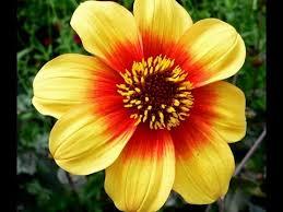 Winter Season Flowers Plants (Urdu/Hindi)