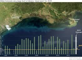 Wet Spring Linked To Forecast For Big Gulf Of Mexico Dead
