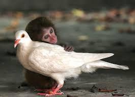 Resalta investigación la necesidad de comprender la vida social de los animales