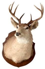 consigned antique deer mount rustic
