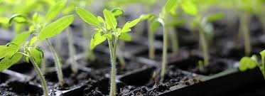 how to grow plants from seeds step by