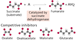 Reactions Enzymes