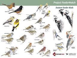 Nature Journal Bird Watching Resources U0026 Printables U2013 Happy Backyard Bird Watch
