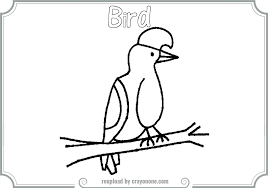 Small Picture Umbrellabird Animal Coloring Pages Umbrella Bird Coloring Page