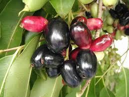 Kerala Jungle Fruits U0026 Trees  YouTubeKerala Fruit Trees
