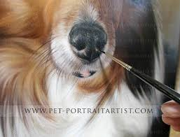 pet portrait joey pet portrait joey s nose