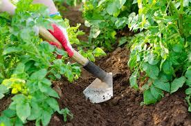 gardening hoe tool for weeding