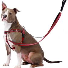 2 Hounds Harness Size Chart 2 Hounds Reflective Freedom No Pull Harness