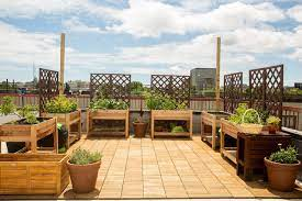 planting a rooftop garden