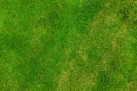 grass texture hd. Grass Pattern Free Stock Photo Public Domain Pictures . Texture Hd