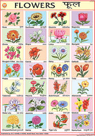Flower Chart In English Buy Flowers Chart 70x100cm Book Online At Low Prices In